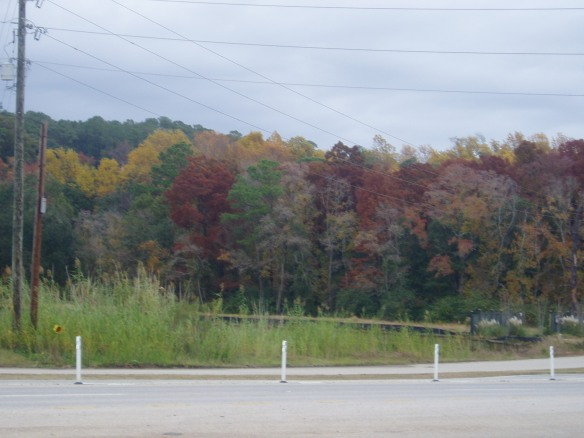 A Bit of Autumnal Color on the Louisianna Border